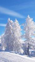 Скриншот зимние пейзажи 2012