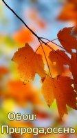 Скриншот Обои: Природа,осень