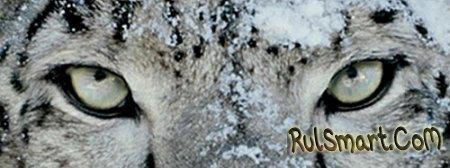 «Снежный барс» продается лучше «леопарда»